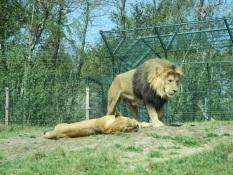 2019 Givskud Zoo 290419 (52)